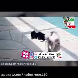 چرا در بین حیوانات خانگ...