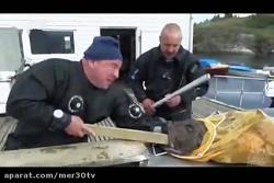 حیوانات وحشی شده گاز گر...