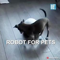 رباتی برای سرگرم کردن و...