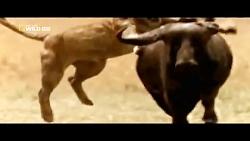 طبیعت و حیوانات