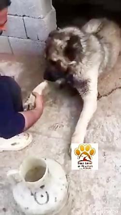 آموزش دست دادن به حیوان...