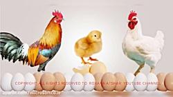 اول تخم مرغ به وجود آمده یا مرغ!