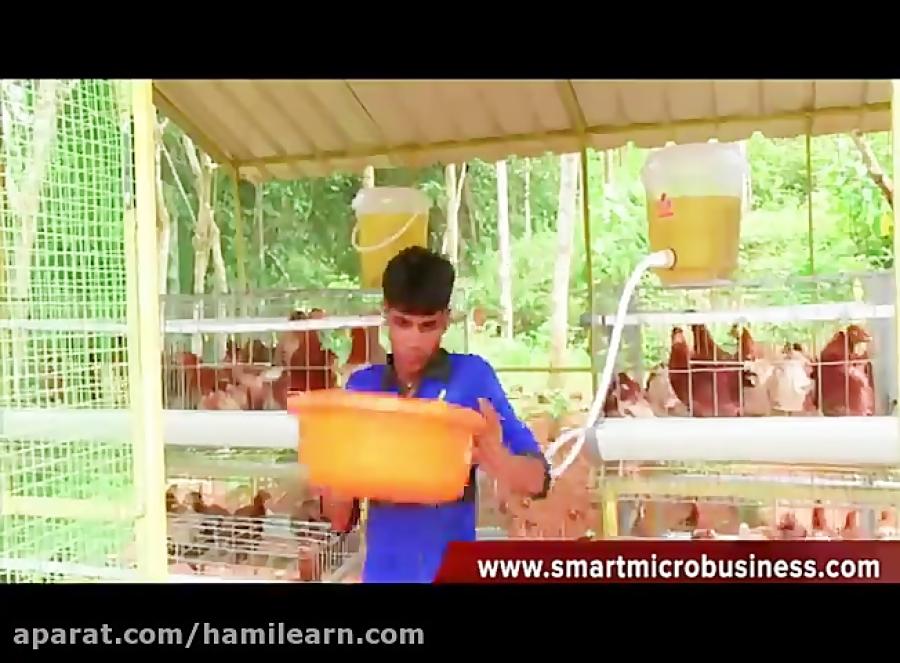 پرورش مرغ بومی کارآفرینی