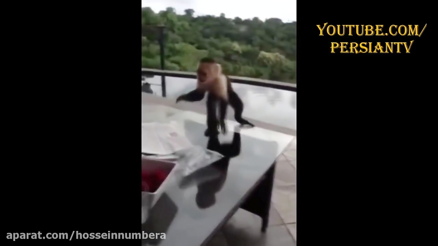 دزدی خنده دار میمون ها از مردم | گلچین کلیپ های پربازدید