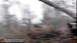 ویدیویی غم انگیز از بی خانمان شدن یک اورانگوتان