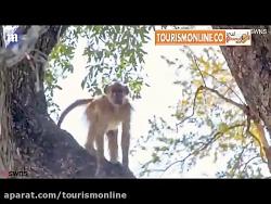 تایم لپس سه دقیقه ای از حیات وحش حیرت انگیز بوتسوانا