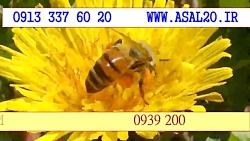 عسل طبیعی کوهستان - جمع آوری گرده