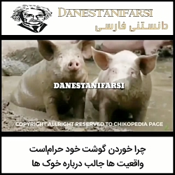 گوشت خوک و حرام بودن آن