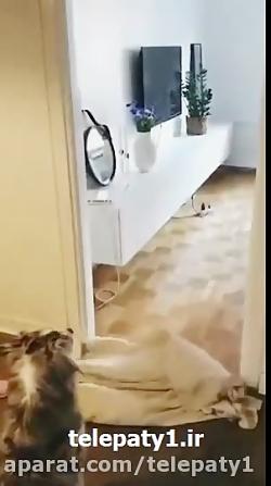 رواج چالش جدید دست انداختن سگها