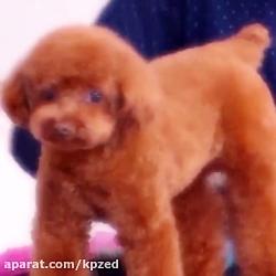 سگ کتی پری ^-^