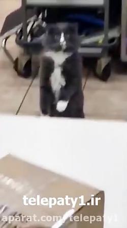 گربه ای که با دیدن مار بدجور شوکه می شود!