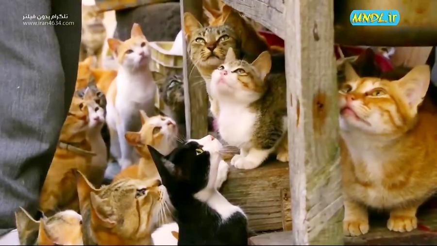 مستند از گربه تا ببر با دوبله فارسی - قسمت 1