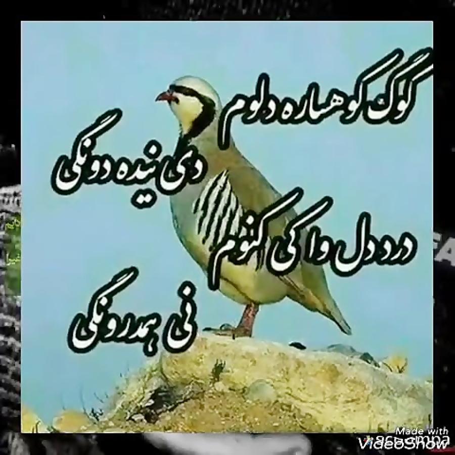 آهنگ زیبای لری بختیاری بافه غم از موسی موسوی