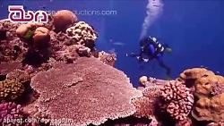 سد بزرگ مرجانی استرالیا ؛ جاذبه بی نظیر گردشگری غواصی