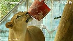 حیوانات باغ وحش در کلمب...