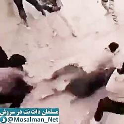 دستگیری داعشی های فرار...