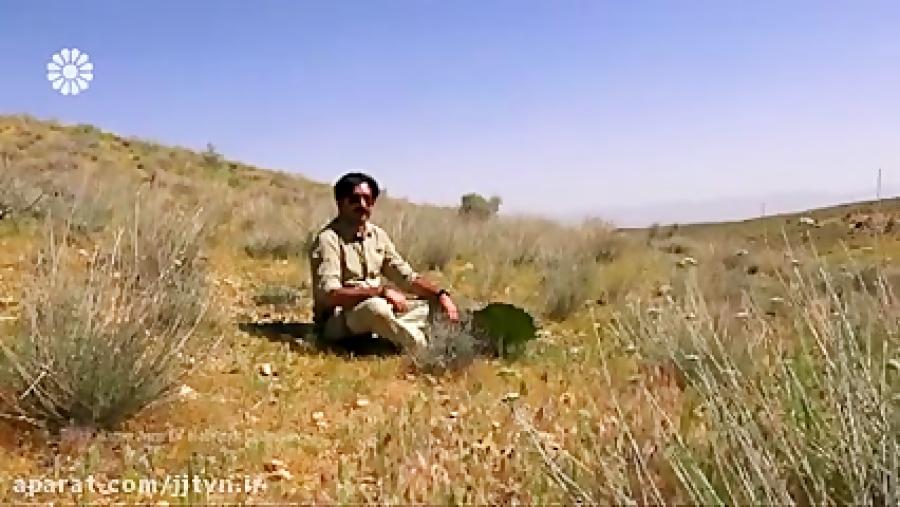 اینجا ایران - قسمت 40 - تاریخ پخش: 970425