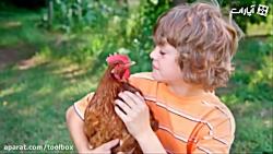 بچه ها و مرغ های بیچاره