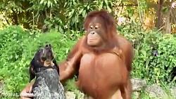 دوستی حیوانات با هم