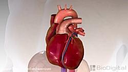 کاربرد انیمیشن در پزشک...