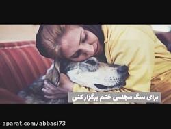 حرفی با سگ باز ها!