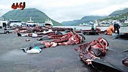 کشتار نهنگها