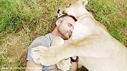 دوستی عجیب این مرد با شیر ها و کفتار ها!