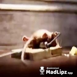 موش ورزشی