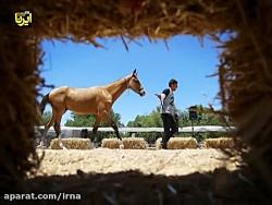 عکسهای منتخب ایرنا-تیر ...
