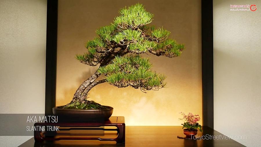 درختان بندانگشتی، نماد عظمت خداوند