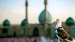 کلیپ مسجد جمکران با آهنگ امید نعمتی