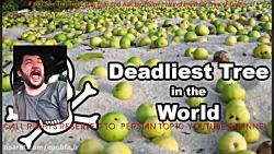 درخت مرگبار : در صورت دیدن این درخت به آن نزدیک نشوید