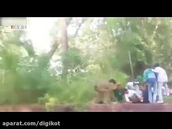 حمله شیرها به مرد گرفتار در قفس