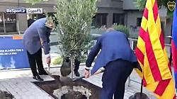کاشت درخت زیتون توسط رئیس بوکا در نیوکمپ