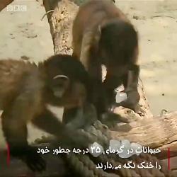 خنک کردن حیوانات در دما...