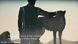 مسابقه یوزپلنگ چیتا و ماشین فرمولا E
