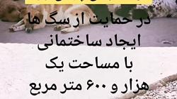 #سگهای_خیابانی_حمایت_کن...
