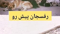 #سگهای_خیابانی_حمایت_کنیم #سگ #سگها #حمایت_از_حیوانات_تنها #حامیان_حیوانات