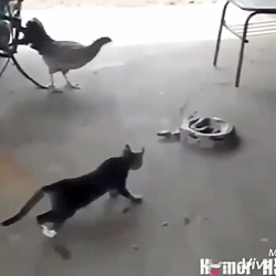 خخخخخ کتک کاری گربه