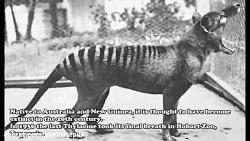 10 تا از عجیب ترین حیوان...