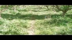 باغ سیب گلاب تاکستان