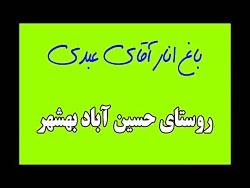 باغ انار حسین آباد بهشهر   مهندس عسکری کارشناس انار