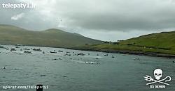 سلاخی شدن صدها نهنگ برای غذای زمستان ساکنان جزایر فارو