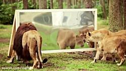 واکنش جالب حیوانات به ت...