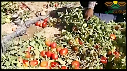 کشاورزی آنلاین