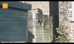 گربه های پارکور کار
