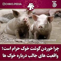 چرا دین اسلام خوردن گوشت خوک را حرام اعلام کرده ؟