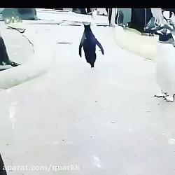 تنها راه دوام آوردن تو ...