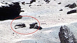 تصاویر ناسا و ثبت گونه ...