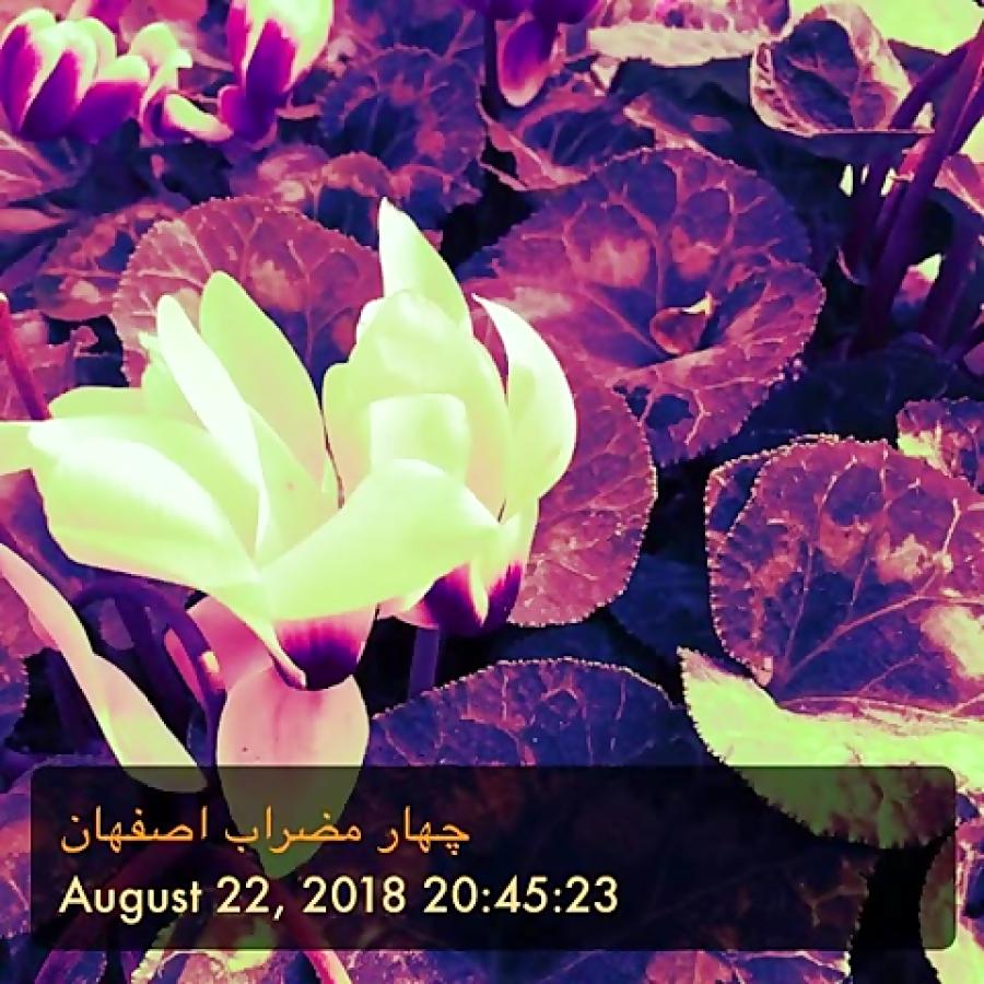بوی پاییز دونوازی چهارمضراب اصفهان ملودی و سهتار محمدجواد مدواری تنظیم و سهتار کوشا میرزایی